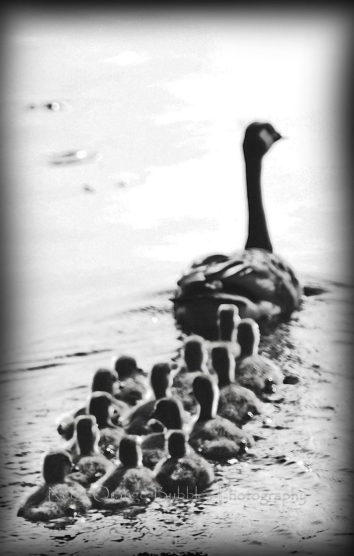 Mother_goose_by_NeoN_orange_Bubbles